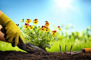 blumenzwiebeln-einen-blumengarten-selbst-pflanzen