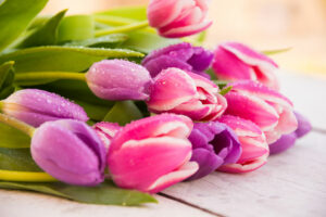 tulpen-sorten-einpflanzen-und-pflege
